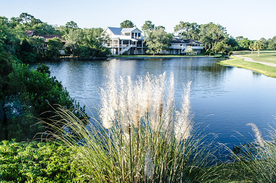 View from our window, Sea Palms Golf and Tennis Resort, St. Simons Island.