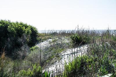 A sand dune near the beach.