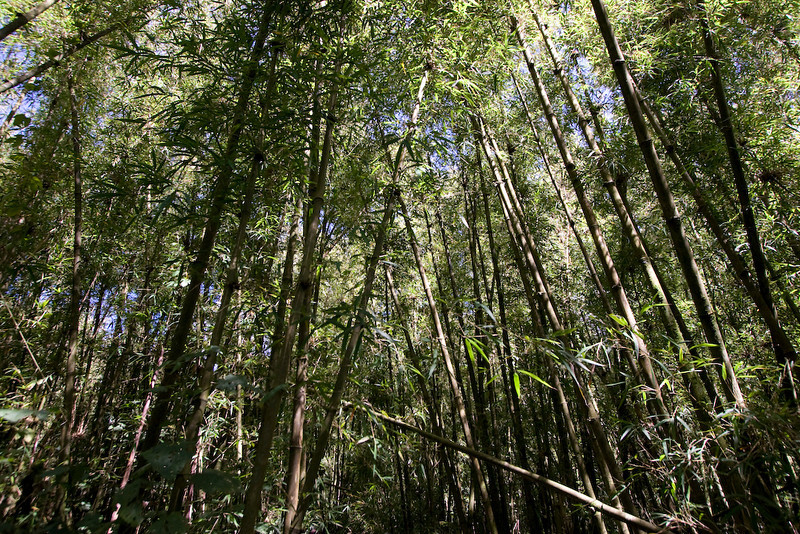 The bamboo forests are beautiful!  We had a perfect day for our trek