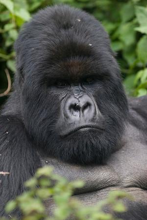 Rwanda - November '08