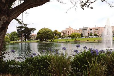 San Fran Pond
