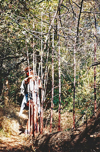 10/18/97 EE, treehugging on the Ben Overturff Trail, Monrovia Canyon Park to Sawpit Canyon. San Gabriel Mountains, Los Angeles County, CA
