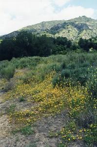 Eaton_Canyon0003