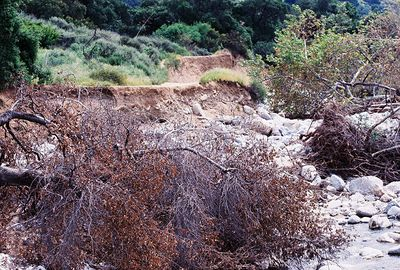 4/2/05 Heavy rains this season have washed out significant portions of sections of the main trail.