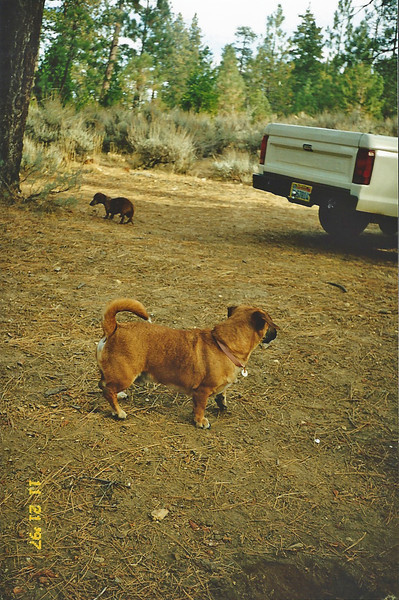 11/22/97 Horse Flats campground.