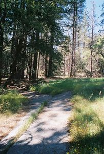 5/29/05 Yellow Pine Forest Nature Trail, Idyllwild County Park, San Jacinto Mountains, Riverside County, CA