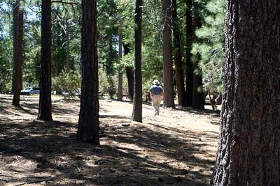 7/12/09 Picnic Area, Idyllwild County Park, San Jacinto Mountains, Riverside County, CA