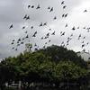 Freaky birds.