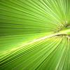 Amazing palm tree leaf