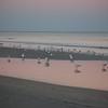 Beach_2Jan08_015