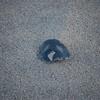 Beach_2Jan08_003
