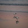 Beach_2Jan08_017