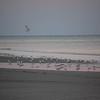 Beach_2Jan08_014