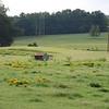Landscape_SC_12Sept08_034