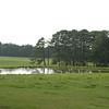 Landscape_SC_12Sept08_033
