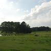 Landscape_SC_12Sept08_032
