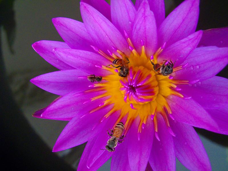 flower and bees outside Wat Saket (The Golden Mount) in Bangkok