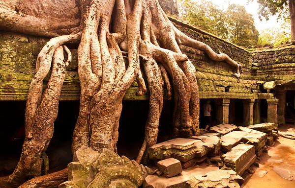 Ta Prohm ruins, Cambodia