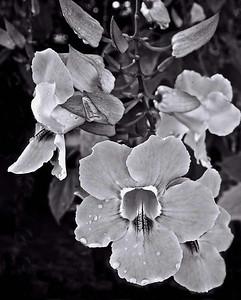 Lavendar flowers-5125monoWeb800