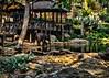 Maesa Elephant Camp, Chiang Mai, Thailand
