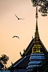 101221-Chiangmai_ChediLuangSunrisePidgeonsBest7613
