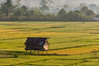 Early morning light gives the rice paddies a warm feeling. Wuasa, Sulawesi, Indonesia, in February 2013. [Sulawesi Wuasa 2013-02 106 Indonesia_V]