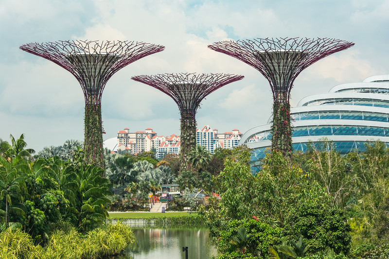 Supertrees by the Cloud Forest Dome at Gardens By The Bay, Singapore, November 2014. [Gardens By The Bay 2014-11 001 Singapore]