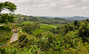 The rolling hillsides of Jati Luwih in Bali could be one of the wonders of the world. [Bali Jatiluwih 2008-10 001 Indonesia]