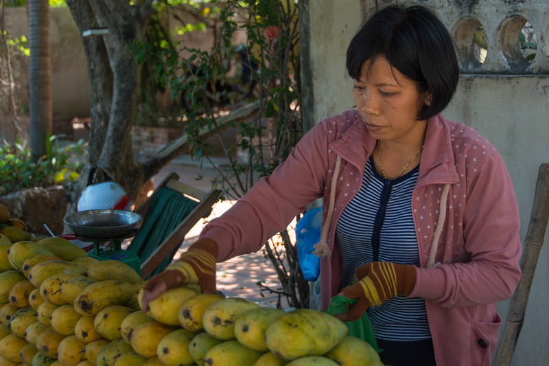 Mangos are in season! Can Gio, southeast of Ho Chi Minh City, Vietnam, May 2015. [Ho Chi Minh City 2015-05 039 Vietnam]