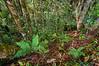 Interior of a lowland tropical rainforest, near Lake Tambing, Lore Lindu National Park, Sulawesi, Indonesia. February 2013. [Sulawesi LoreLindu 2013-02 HDR 15-1 Indonesia_TC]