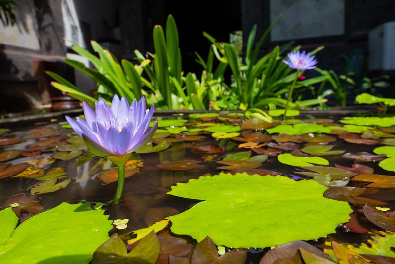 Ubud Water Feature, Bali