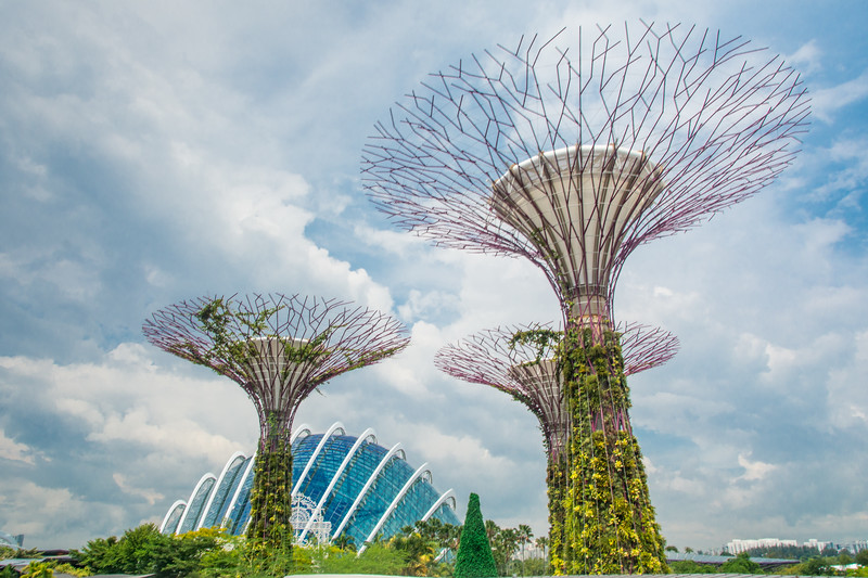 Some of the Supertrees and the Cloud Forest Dome at Gardens By The Bay, Singapore, November 2014. [Gardens By The Bay 2014-11 002 Singapore]