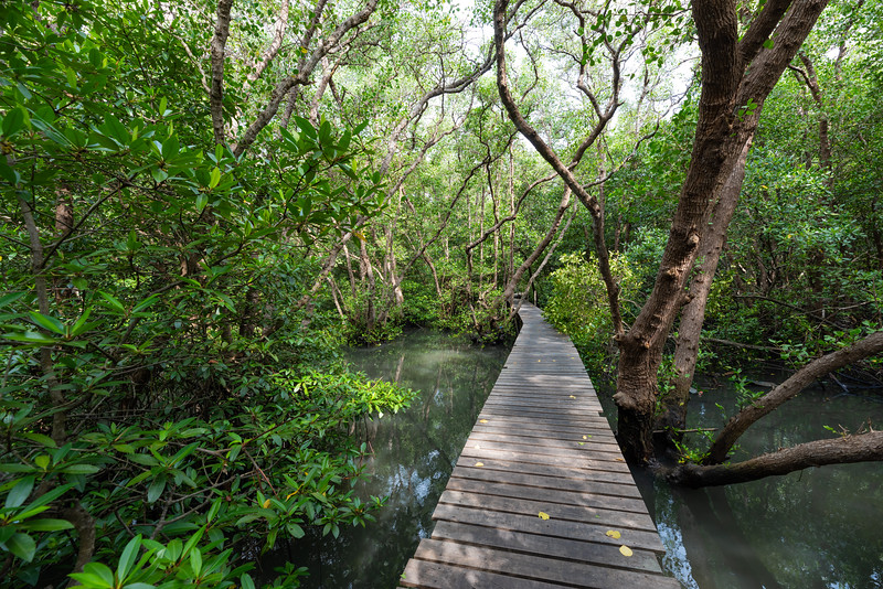 Bali Mangroves