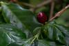 Suan Lahu Coffee Farm