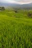 Rice paddy at Jatu Luwih, Bali, October 2008. [Bali Jatiluwih 2008-10 023 Indonesia]