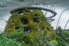 The aerial walkway inside the Cloud Forest Dome at Gardens By The Bay in Singapore, November 2014. [Gardens By The Bay 2014-11 103 Singapore]