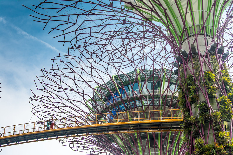 The Supertrees and aerial walkway at Gardens By The Bay, Singapore, November 2014. [Gardens By The Bay 2014-11 004 Singapore]