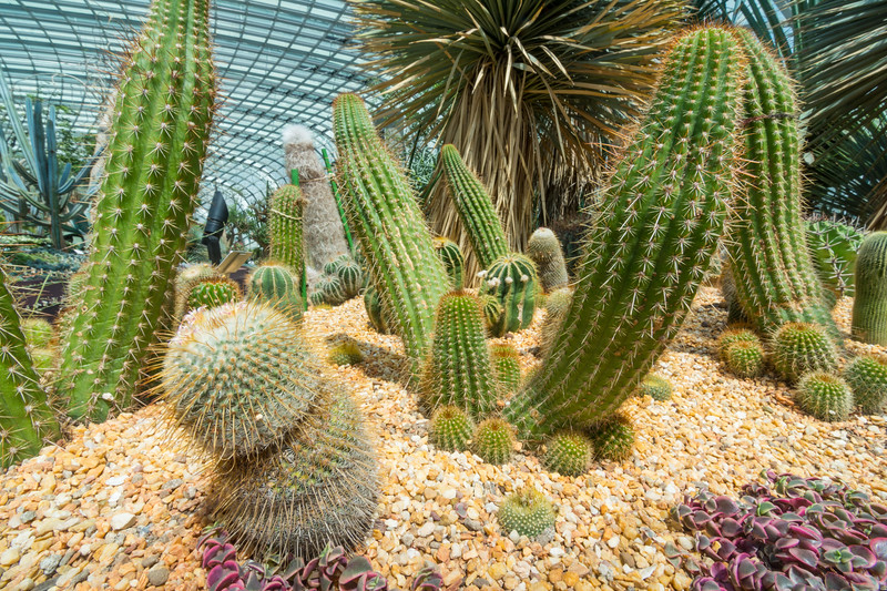 Cacti inside the Flower Dome at Gardens By The Bay, Singapore, November 2014. [Gardens By The Bay 2014-11 040 Singapore]