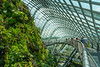 The aerial walkway inside the Cloud Forest Dome at Gardens By The Bay in Singapore, November 2014. [Gardens By The Bay 2014-11 090 Singapore]