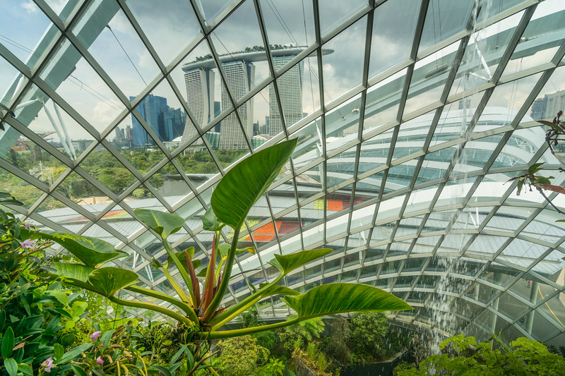 A lush aroid growing in the Cloud Forest Dome at Gardens By The Bay in Singapore, with the Marina Bay Sands Hotel in the background, November 2014. [Gardens By The Bay 2014-11 067 Singapore]