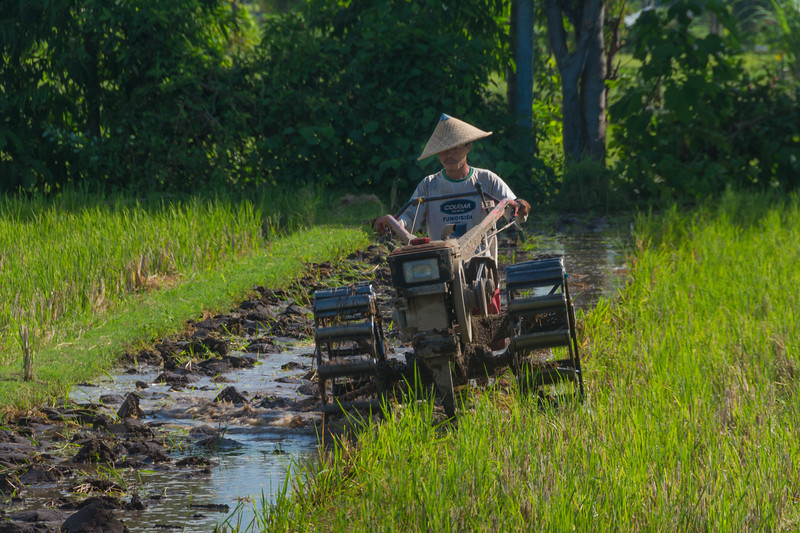 A rice farmer in Lombok, Indonesia ploughs his paddy, July 2017. [Lombok 2016-07 007 Indonesia]
