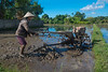A rice farmer in Lombok, Indonesia ploughs his paddy, July 2017. [Lombok 2016-07 016 Indonesia]