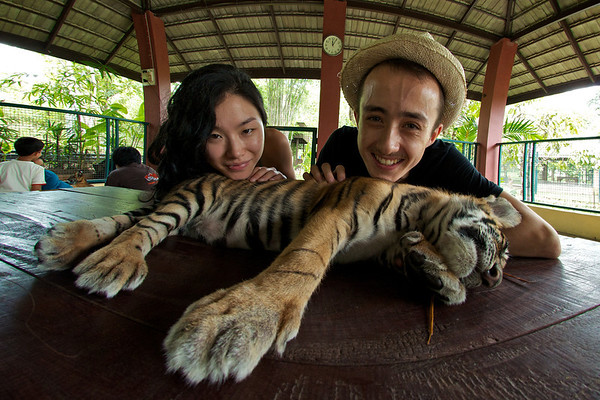 Playing with tiger cubs in Chiang Mai!