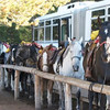 9.18.09 - Horses lined up and ready to go<br /> (Photo from K.Johnson)