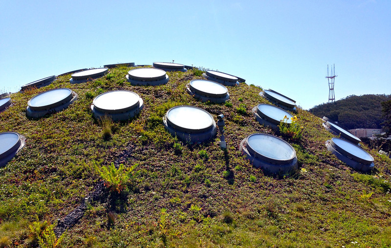 Roof of the California Academy of Science