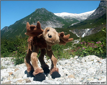 """A TOY MOOSE"", Shakes lake, Alaska, USA-----""PLYSOVY LOS""."