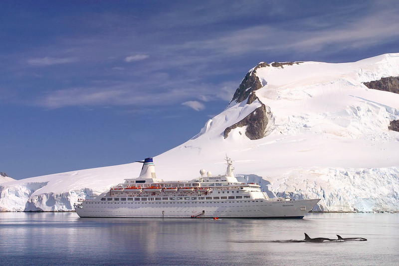 MV Discovery (Voyages of Discovery) at Paradise Bay, Antarctica. With Killer Whales in foreground.
