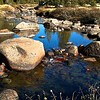 High Sierra stream in fall