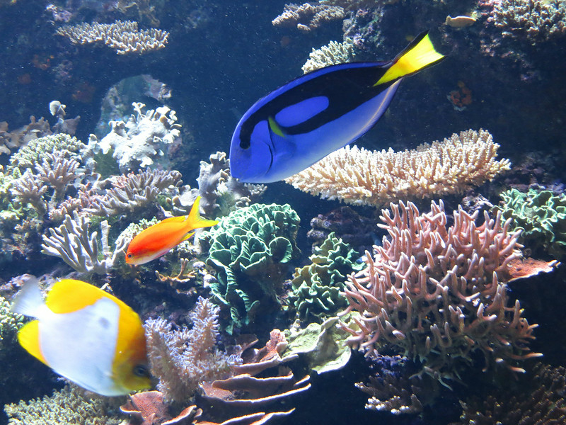 Red fish, blue fish, gold fish.