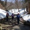 Spring snow walking on Mt Daisen.